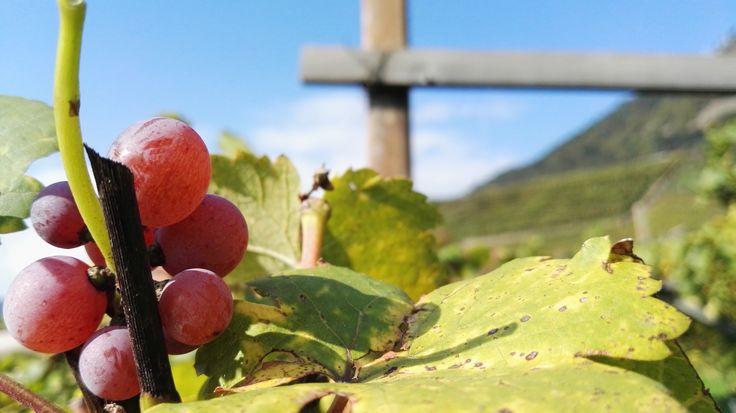 Mezzacorona Rotari nei Territori del Vino Trentino